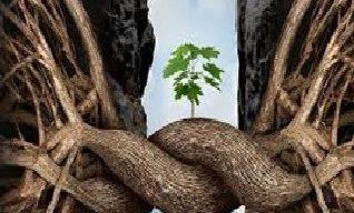 Transformación y Recuperación: La Resiliencia como una Herramienta Organizacional